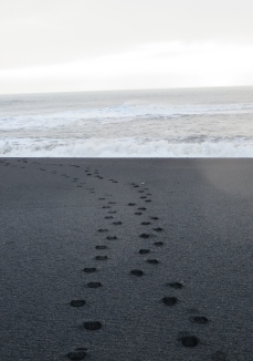 Leaving only footprints (Vík)