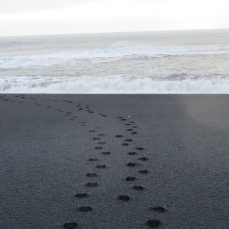 Leaving only footprints (Vík)