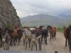 A few companions along the Cañón del Colca road