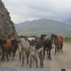 A few companions along the Cañón del Colca road