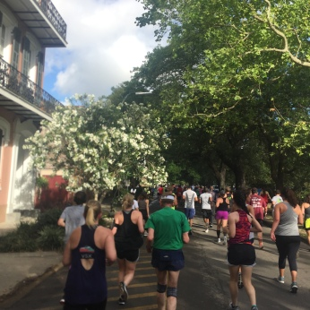 A few friends join us for a morning run (New Orleans)