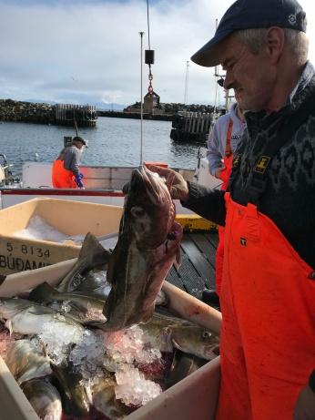 Today's Catch (Grímsey)